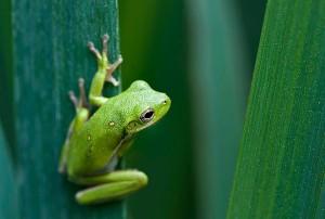 charlieheck_broken bow frog 2_